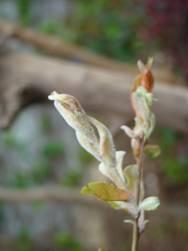 南昌市园林植物有害生物监控信息--园科病虫害监控总第(44期)