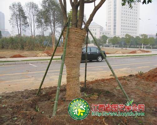 对植物冬季防冻措施的一点建议